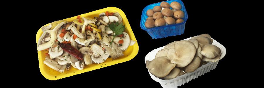 Funghi Vari