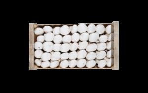 fungocesena_prodotti_funghi_coltivati