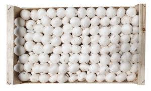 fungocesena_prodotti_funghi_coltivati_champignon_8_file