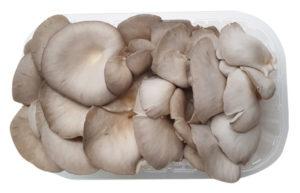 fungocesena_prodotti_funghi_coltivati_pleurotus_confezionati